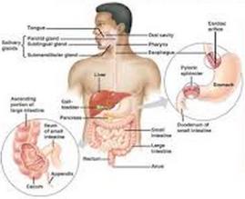 Obat Alami Infeksi Saluran Pencernaan